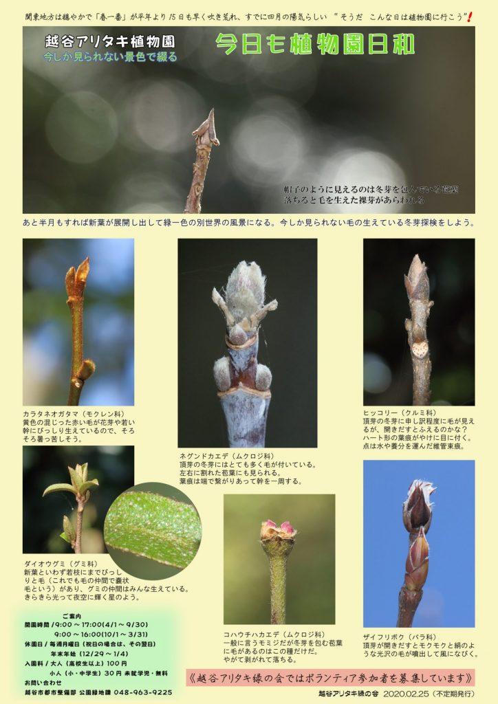 越谷アリタキ植物園2月:毛の生えている冬芽探検