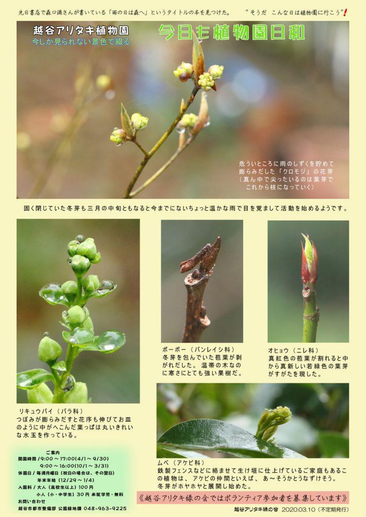 越谷アリタキ植物園3月:冬芽の目覚め