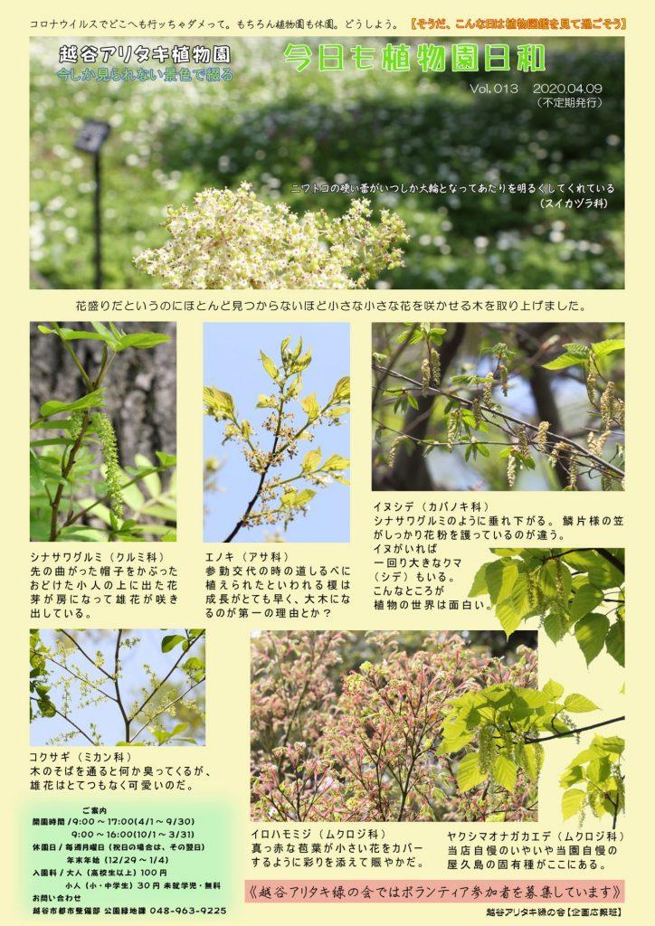 越谷アリタキ植物園4月:大きな樹の小さな花
